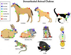 Chakra em animais2